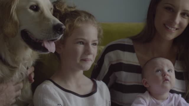 close-up of happy family with golden retriever at home - two animals stock-videos und b-roll-filmmaterial