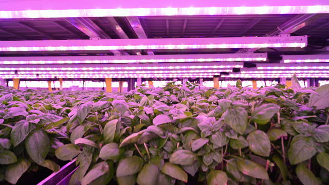 close-up of herbs growing in vertical farming environment - less than 10 seconds stock videos & royalty-free footage