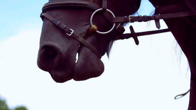 Close-up of horse chewing