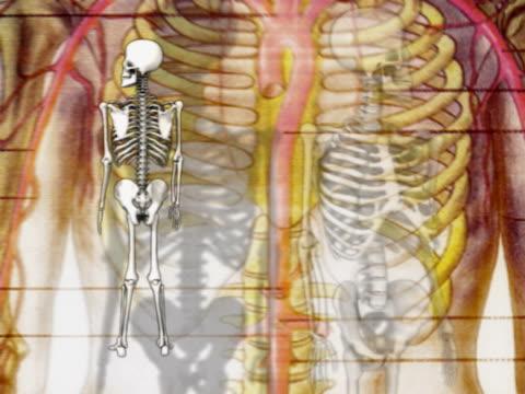 close-up of human skeletons rotating - biomedical illustration stock videos & royalty-free footage