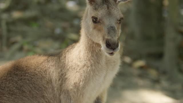 Close-up of kangaroo eating