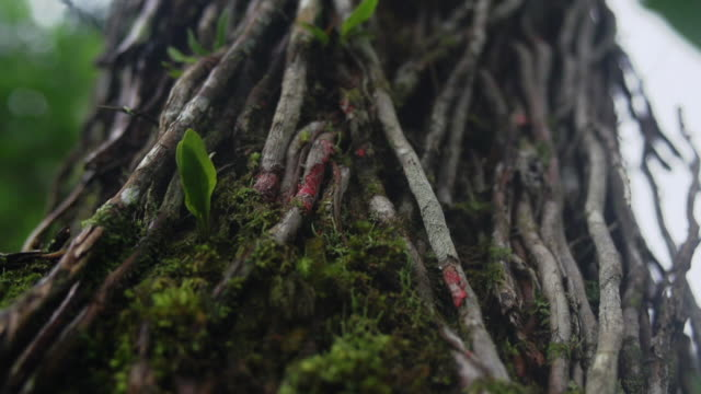 close-up of layers of roots and moss on tree - root stock videos & royalty-free footage