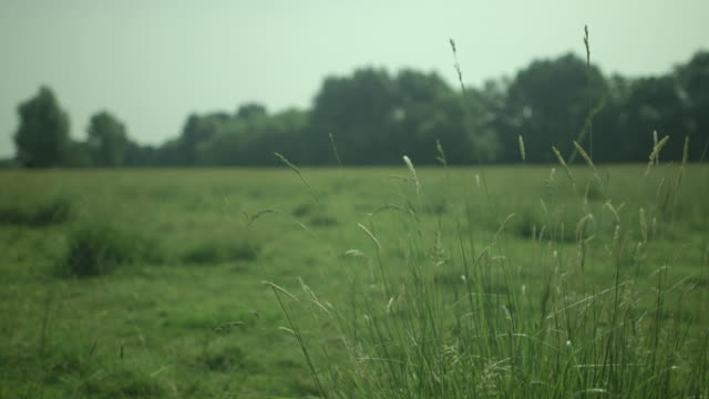 Close-up of long tuft of grass on Stourbridge Common in Cambridge, UK.