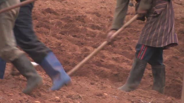 close-up of men hoeing furrows in a plowed field. - plowed field stock videos & royalty-free footage