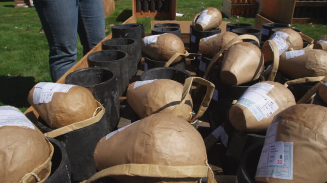 close-up of packaged fireworks being placed on ground mortars before a show - artbeats stock videos & royalty-free footage