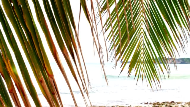 close-up of palm leaf against caribbean beach - tropical tree stock videos & royalty-free footage