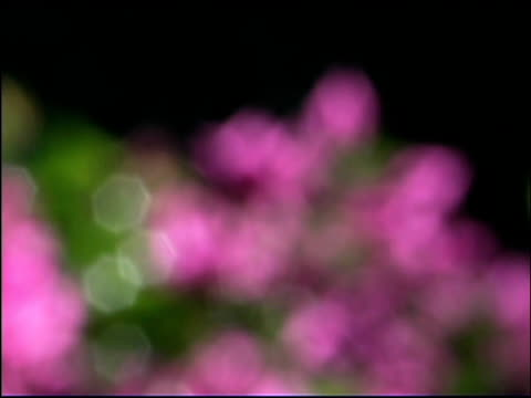 stockvideo's en b-roll-footage met close-up of pink flowers - uitfaden