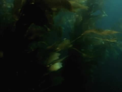 close-up of plants underwater - aquatic organism stock videos & royalty-free footage