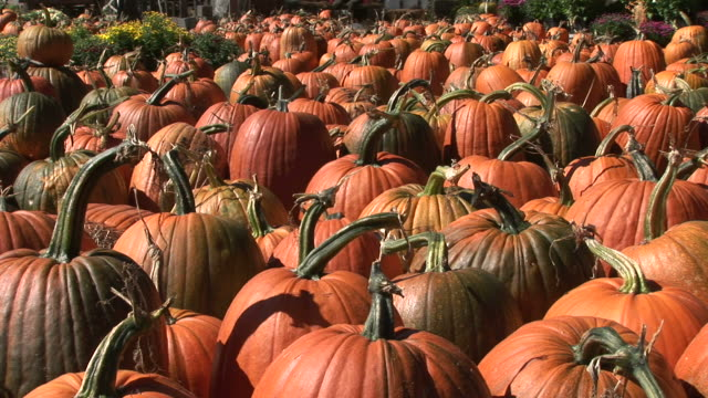 Close-up of pumpkins in Vermont United States