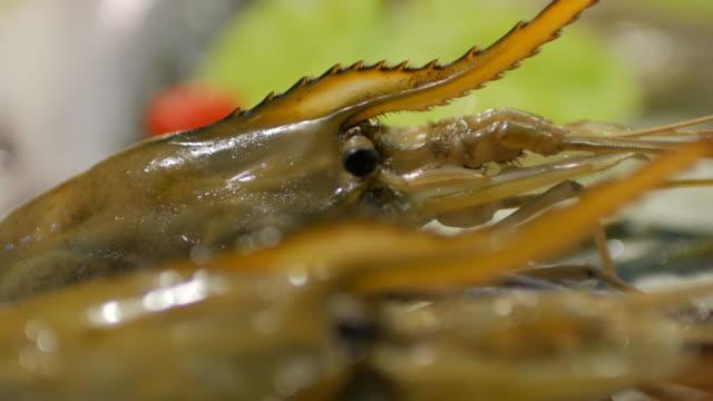 close-up of river prawn and fresh seafood on ice , panning shot , 4k(uhd) - prawn stock videos & royalty-free footage