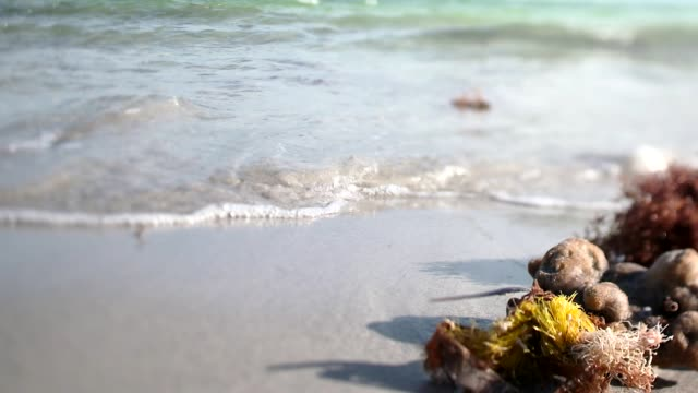 vídeos y material grabado en eventos de stock de close-up of seaweed on a beach and gentle waves coming on shore in slow motion, miami, florida - condado de miami dade