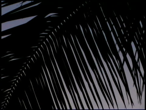Close-up of silhouetted palm tree fronds blowing in the wind.
