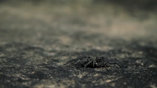 closeup of small spider being caught under container - arachnid stock videos and b-roll footage