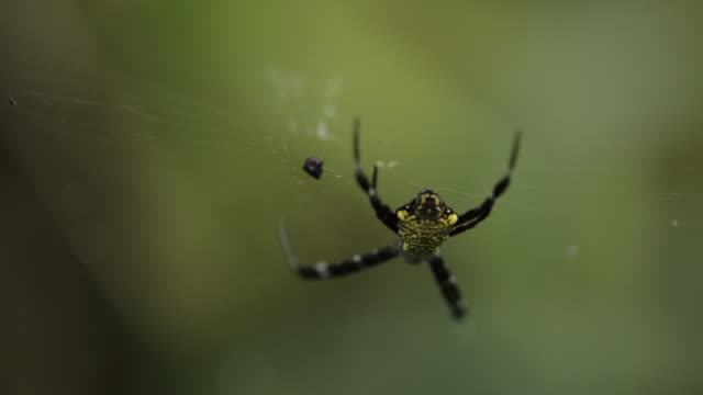 Close-up of spider on web at field