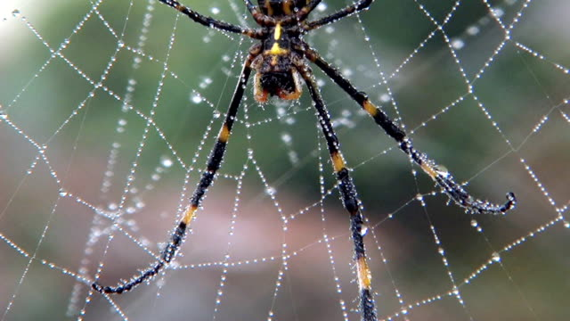 hd: close-up of spider on web (video) - spider web stock videos & royalty-free footage