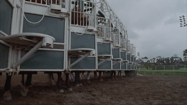 close-up of starting gates with horses taking off at the beginning of a race. - racehorse stock videos & royalty-free footage