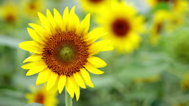 hd ntsc, pal: primo piano di fiore con insetti (video) - video collage video stock e b–roll