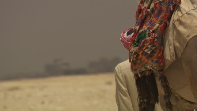 Close-up of the back of a camel and its handler as they walk away, Giza, Egypt.