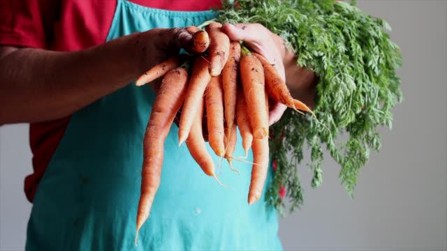 vídeos de stock e filmes b-roll de close-up of the hands of a man carrying a bunch of carrots - ramo parte de uma planta