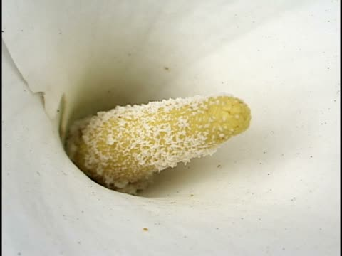 close-up of the stamen of a flower - stamen stock videos and b-roll footage