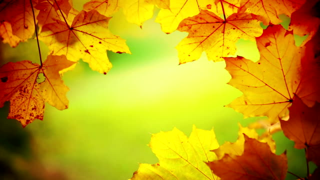 closeup of tree branch and leaves at fall. - vignette stock videos & royalty-free footage