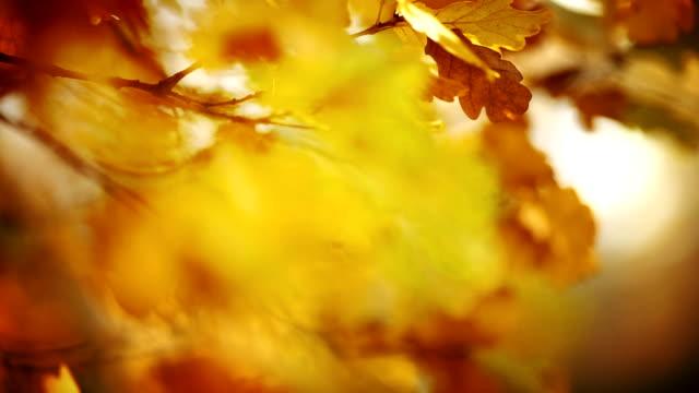 Nahaufnahme von tree branch und Blätter im Herbst.