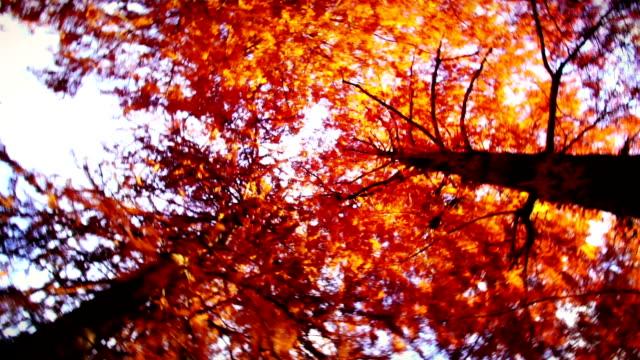 vídeos de stock e filmes b-roll de grande plano de ramo de árvore e folhas no outono. - vinheta