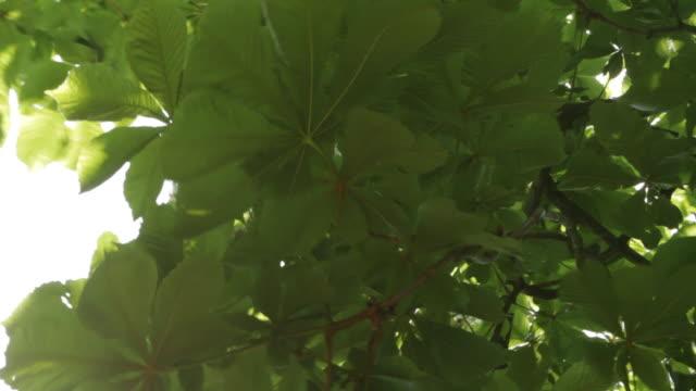 クローズアップの樹木の葉で夏をクールします。 - 木漏れ日点の映像素材/bロール