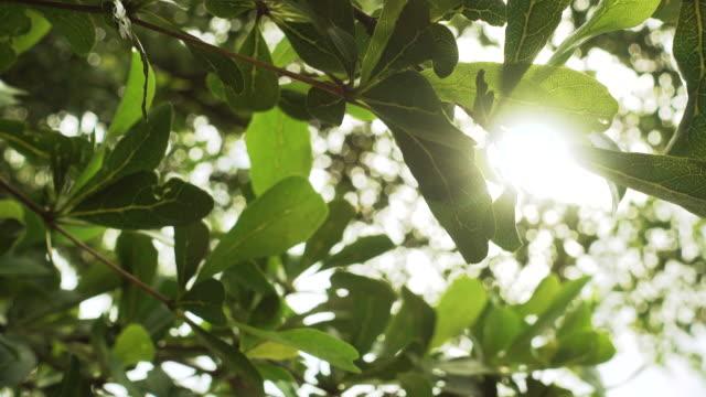 クローズ アップ ツリーの葉を通して輝く太陽 - 木漏れ日点の映像素材/bロール