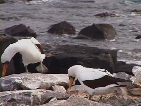 vídeos y material grabado en eventos de stock de close-up of two birds - grupo pequeño de animales