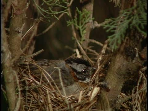 vídeos y material grabado en eventos de stock de close-up of two sparrows feeding their young - grupo pequeño de animales