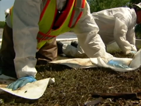close-up of two workers of the clean up crew blotting oil out of grass with absorbent pads after the exxon mobile spill at the yellowstone river. a... - porous stock videos & royalty-free footage