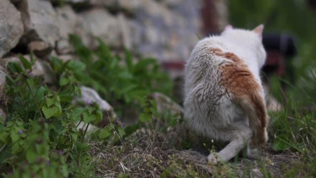 nahaufnahme der white domestic cat schleicht sich im garten und genießen den frühling. - auf den zehenspitzen stock-videos und b-roll-filmmaterial
