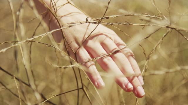 vidéos et rushes de closeup of womans' hand brushing through tall dead grass - élevé