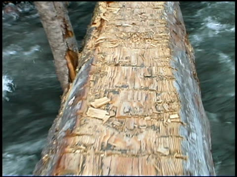 close-up of wooden log - mt rainier national park stock videos & royalty-free footage