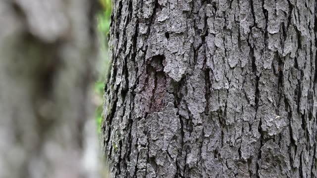 vídeos de stock, filmes e b-roll de close-up em oak tree bark na floresta em quebec, canadá - envelhecido efeito fotográfico