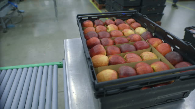 Close-up on stacked apples in a plastic crate in a brightly-lit processing plant as workers move about it the background, Kent, UK.