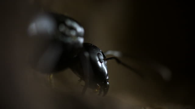 vídeos de stock e filmes b-roll de close-up on the face of a queen ant - formiga