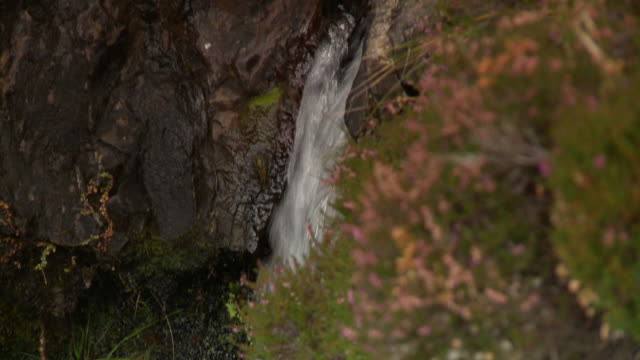 closeup on waterfall causing erosion and moss - falling water stock videos & royalty-free footage