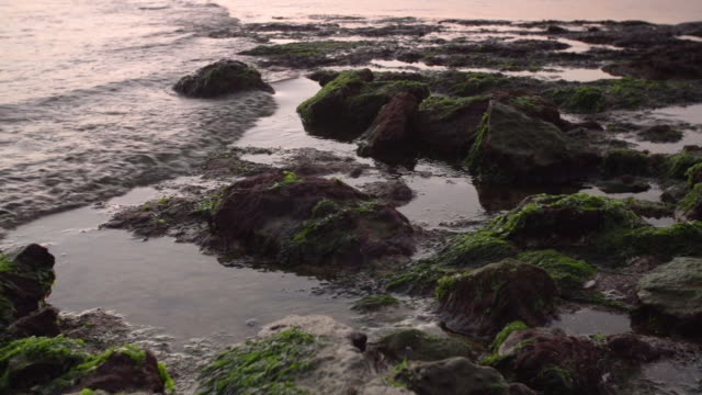 Closeup pan of tide water flooding over mossy rocks at sunset
