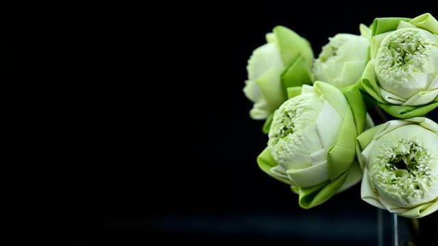 Closeup pannen: gevouwen lotus in een glasvaas gerangschikt