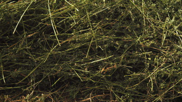close-up panning shot of peices of hay and grass. - プロボ点の映像素材/bロール