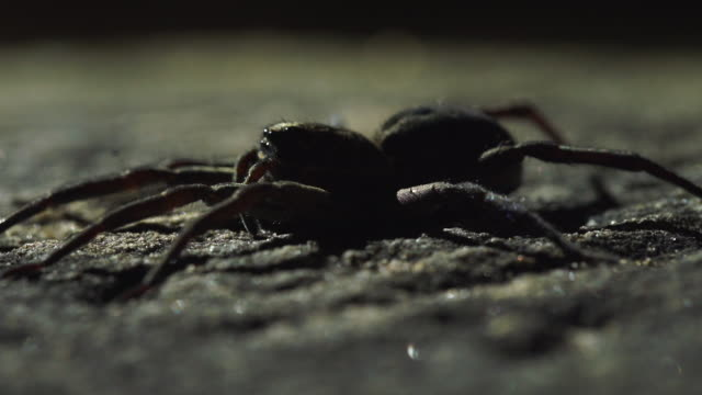 closeup perspective of spider jolting from left to right - largo descrizione generale video stock e b–roll