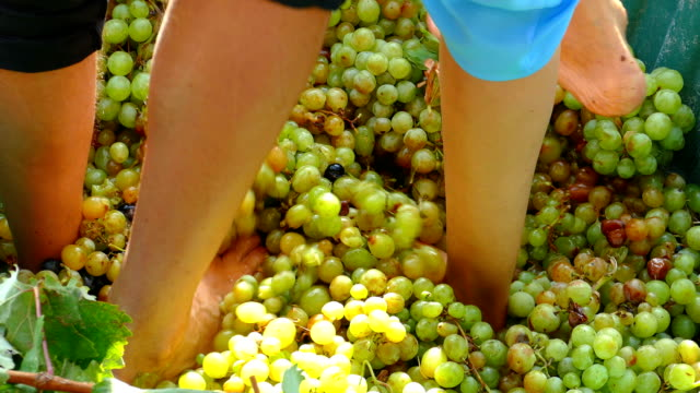 close-up - press grapes with legs - an old way of making wine - grape stock videos & royalty-free footage