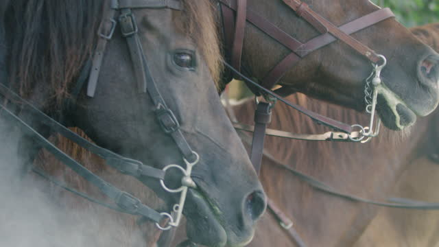 close-up reenactment shot of a group of horsemen breaking into a gallop during the 18th century - battle video stock e b–roll