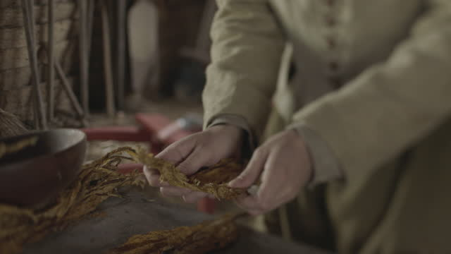 close-up reenactment shot of a man inspecting dried tobacco leaves during the 17th century - 17th century stock videos & royalty-free footage