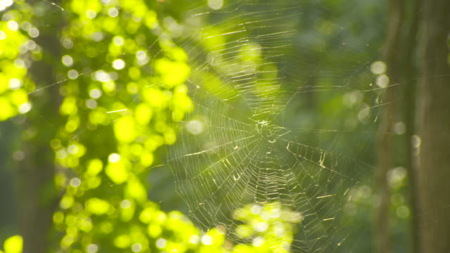 Close-up sequence showing a cobweb in a sunny wooded area near Chesapeake Bay, Virginia, USA.