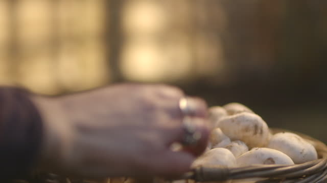 close-up sequence showing a hand picking out mushrooms from a basket, uk. - mushroom stock videos and b-roll footage