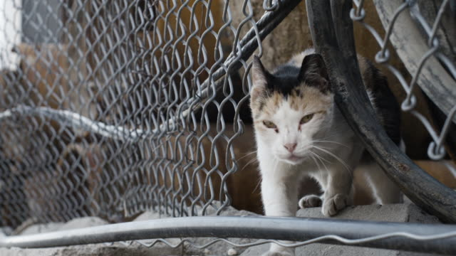 closeup shot of a junkyard cat - slow motion - chainlink fence stock videos and b-roll footage