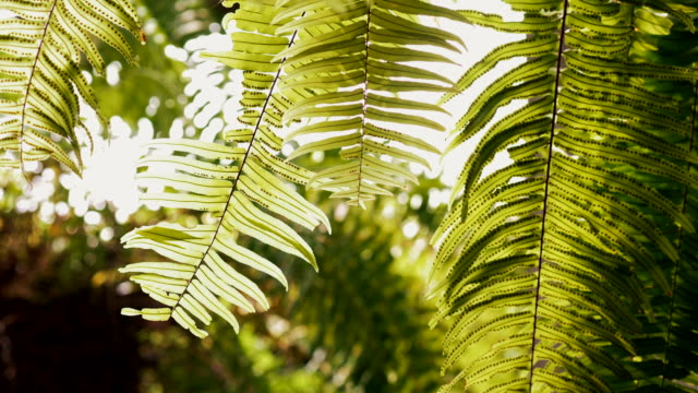close-up shot of a lush green plant of the fern with sunlight. - stock video - fern stock videos & royalty-free footage